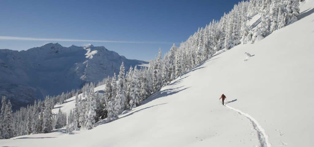 Pemberton Backcountry Skiing