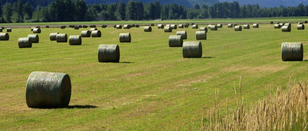 Pemberton Farming